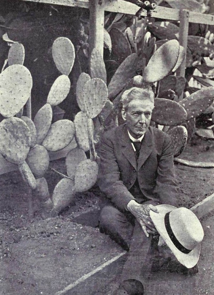 Luther Burbank with spineless cactus that he developed.