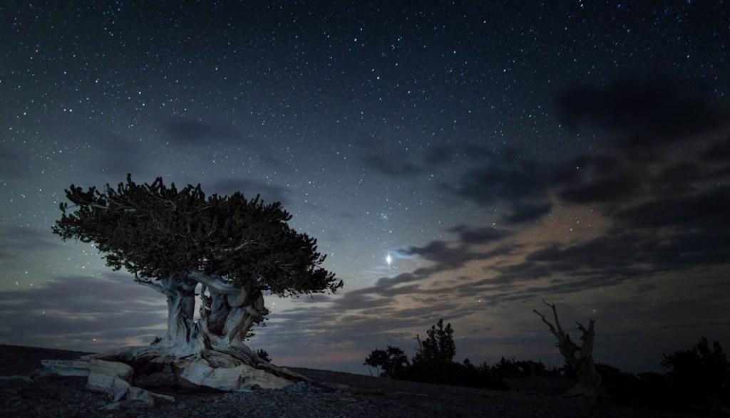 Bristlecone and starry sky: National Park Service